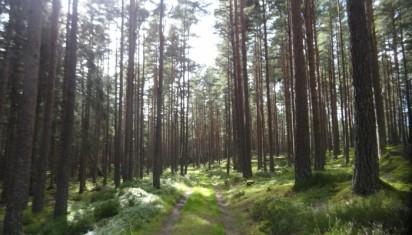 forestwalk-700x400